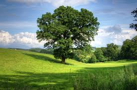 free stock photos of trees pexels