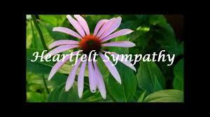 sympathy ecards heartfelt sympathy ecard