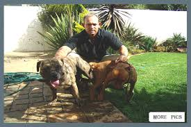 american pitbull terrier jeep bloodline law kennels home of the ultimate dog