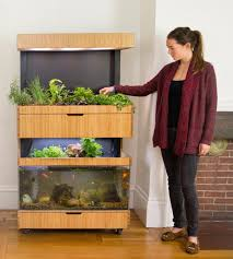 this somerville start up teaches you how to grow lettuce in your