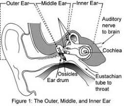 hearing how do our ears work activity teachengineering org