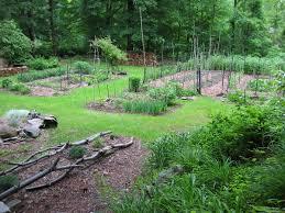 9 reasons to start a vegetable garden vegetable gardener