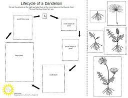 dandelion seeds unit study ideas