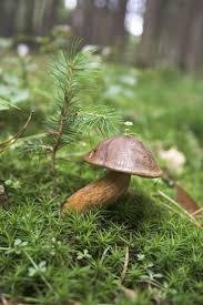 36 best mushrooms toad stools u0026 fungus amungus ect images on