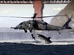 Shark Attack Meme - fact check shark attack