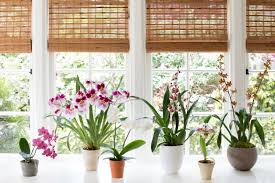 browse orchids gardenista
