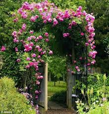 roses best climbing plant for shade the best climbing plant for