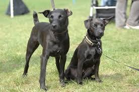 dogs u0026 ink poisoning cuteness
