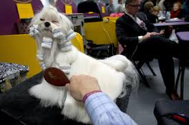 who won the dog show on thanksgiving 140th westminster kennel club dog show la times