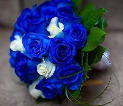 Blue Roses Blue Gift Of Roses And Personal Notes On Petals