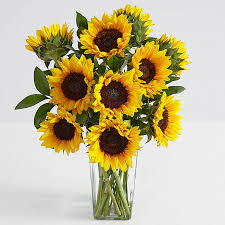 sunflower delivery sunflowers send sunflowers online sunflower delivery