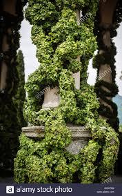 climbing plant on the pillar of villa del balbianello lenno lake
