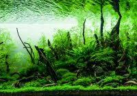 Aga Aquascape The Most Stylish Aquascape Forest Ideas Aquascape Ideas