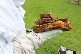 backyard beekeepers are buzzing wlrn