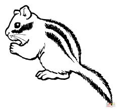 chipmunk eating nut coloring page free printable coloring pages