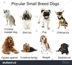 Types Of Dogs Royalty Free Different Small Breeds Of Dogs Together U2026 350869691