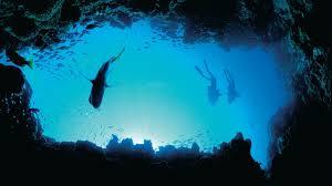 where to see australian marine life tourism australia