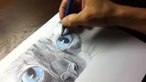 siamese cat pen drawing youtube
