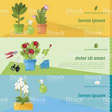 Beautiful House Plants by Beautiful House Plants Stock Vector Art 544573800 Istock
