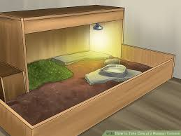 how to build a tortoise table how to take care of a russian tortoise 10 steps with pictures