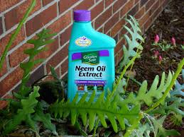 neem oil uses using neem oil insecticide in the garden