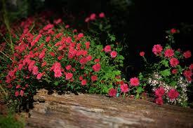 gardening archives tbr news media