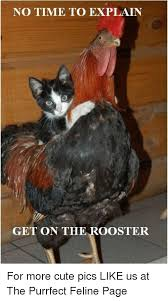 Rooster Meme - 25 best memes about rooster cock rooster cock memes