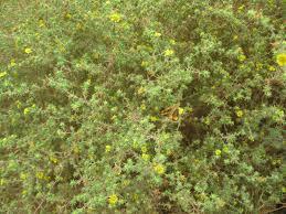 southern california native plants california native plants at gum grove park u0026 heron pointe