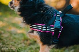 Comfort Flex Dog Harness The World U0027s Best Photos Of Comfortflex Flickr Hive Mind