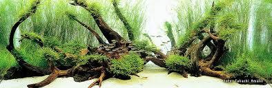Aquascape Inspiration Inspirational Wood Dominated Aquascapes Uk Aquatic Plant Society