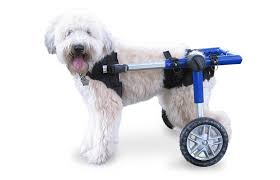 american eskimo dog giving birth amazon com dog wheelchair for medium dogs 26 69 lbs by