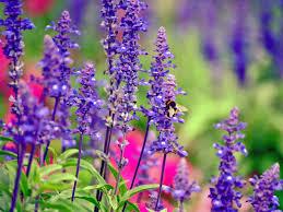 flowers for vegetable garden podcast ep 31 u2013 flowers for bees in the vegetable garden