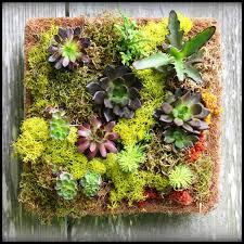 square succulent frame garden art decor givingplants com
