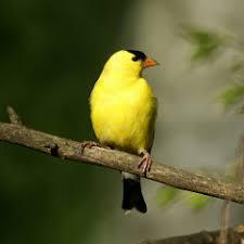 Nj Backyard Birds by 4570024705 6275403802 N Jpg