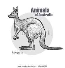 animals australia set koala bear wombat stock vector 667338979