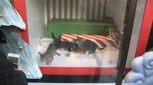 puppies and kittens on display in macy s window story ktvu