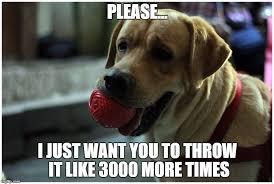 Benson Dog Meme - play ball dog meme jpg 744 500 pet memes pinterest pet memes