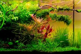 Aquascape Store Albany Aquarium Bay Area Tropical Fish Store Home Of The