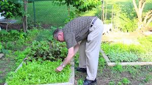 plants native to ohio ohio native plant gardening like a pro youtube