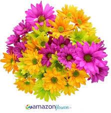 Yellow Pom Pom Flowers - tinted poms flowers wholesale daisy flowers diy fresh flowers
