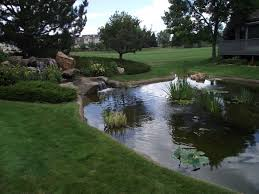 considerations when designing an outdoor pond or backyard water