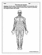 this site has some nice anatomy worksheets that would be good
