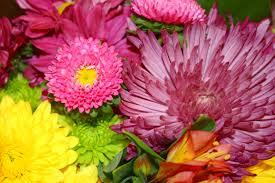 colorful flowers and mums bouquet close up picture free