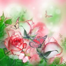 beautiful roses and butterflies stock photo seqoya 91434034