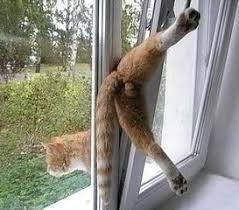 balkon katzensicher machen warum ist es so wichtig fenster und balkone katzensicher zu machen