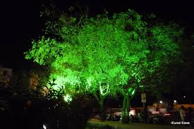 Cool Tree by Living Trees That Glow In The Dark Very Cool Youtube