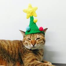 cat christmas 9 cats wearing christmas hats