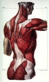The Human Anatomy Muscles 49 Best Kratos Images On Pinterest Human Anatomy Anatomy