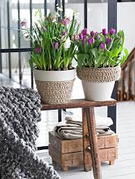 Spring Decor 125 Best Bulbs In Pots Images On Pinterest Spring Bulbs Flowers