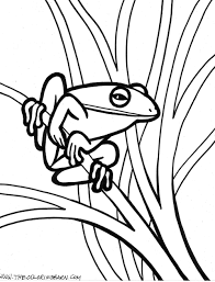 frog coloring pages bestofcoloring com